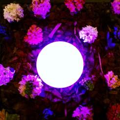 fiori2